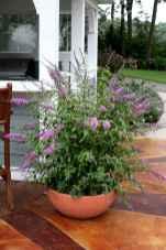 Best summer container garden ideas 10