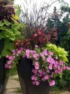 Best summer container garden ideas 55