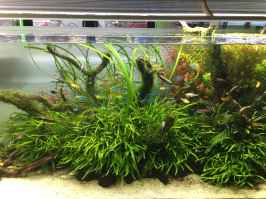 Relaxing aquascaping ideas for inspiration 11