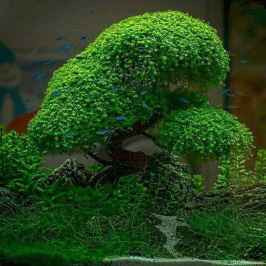 Relaxing aquascaping ideas for inspiration 12