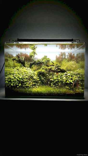 Relaxing aquascaping ideas for inspiration 13
