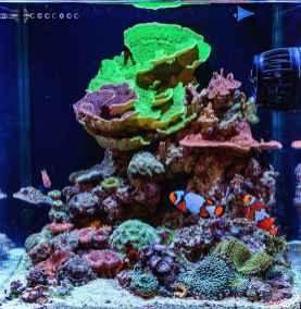 Relaxing aquascaping ideas for inspiration 14