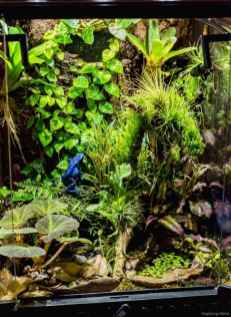 Relaxing aquascaping ideas for inspiration 32