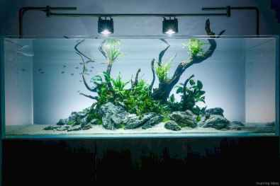 Relaxing aquascaping ideas for inspiration 37