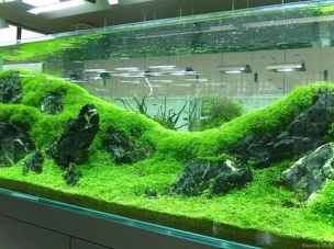 Relaxing aquascaping ideas for inspiration 43