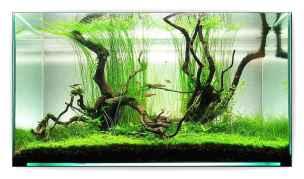 Relaxing aquascaping ideas for inspiration 44