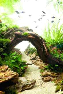 Relaxing aquascaping ideas for inspiration 9