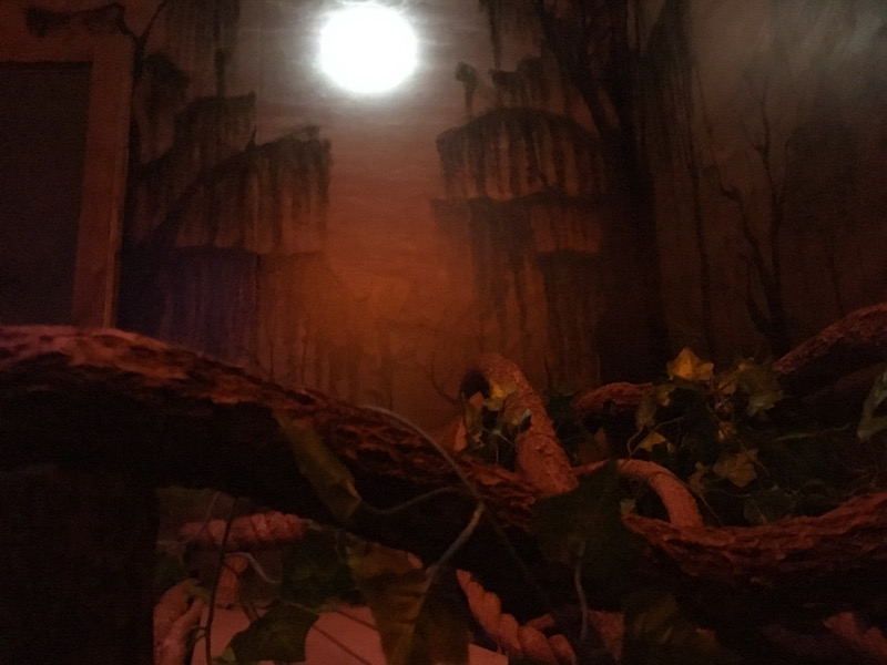 In game - a series of vines in the foreground, the moon shines in the background.