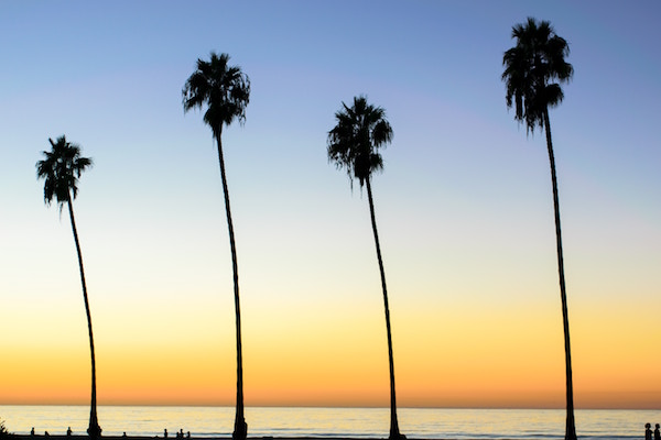 4 tall palm trees along the beach, the horizon in the background.