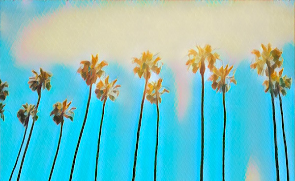 Stylized photos of palm trees on a beautiful day.