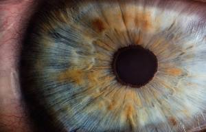 Closeup image of a blue eye.