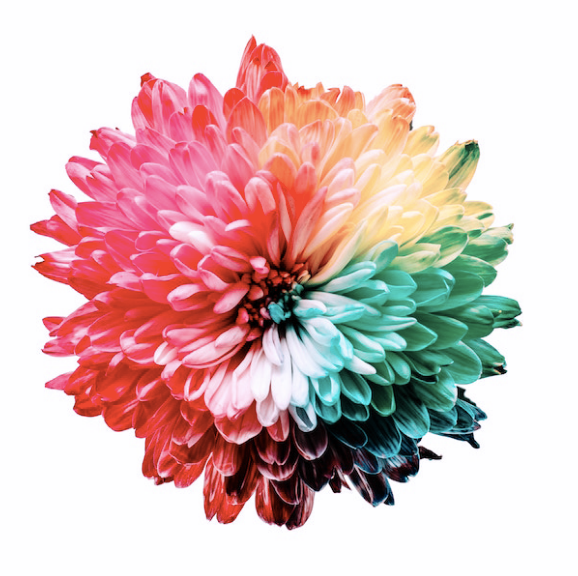 A flower depicting the color spectrum in Tritanomaly
