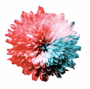 A flower depicting the color spectrum in Tritanopia