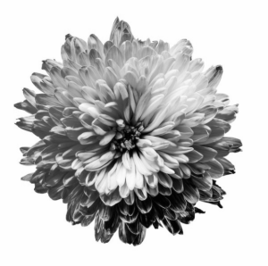 A flower depicting the color spectrum in Monochromacy