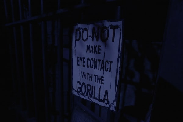 "In-game: A sign reads, ""Do not make eye contact with the gorilla."""