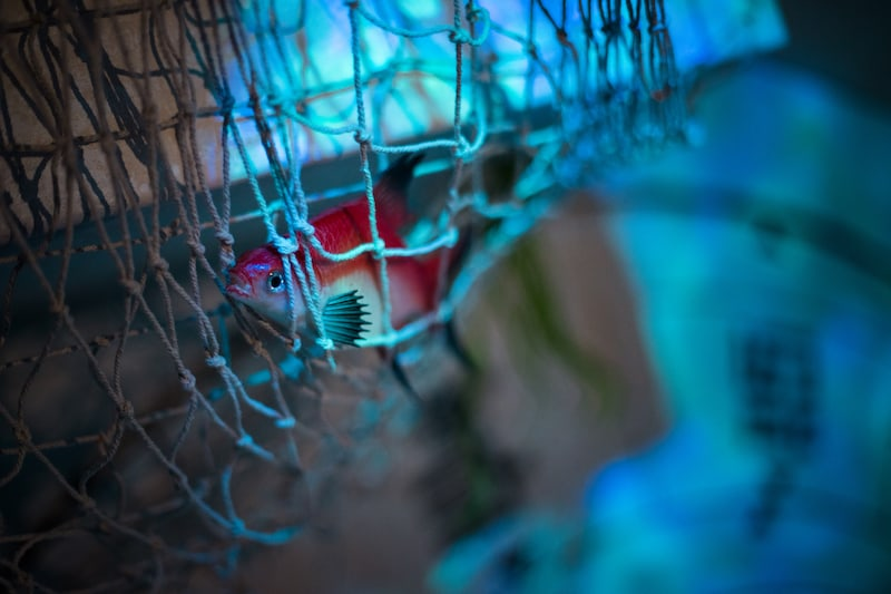 In-game: Closeup of a fish caught ina net.