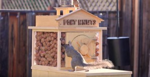 """Squirrel breaking into a nut vault named, """"Fort Knuts."""""""