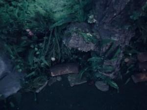Closeup of flora, wood, and rocks.