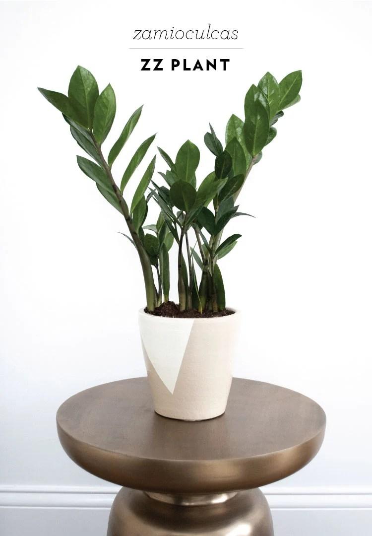 rft_plant13