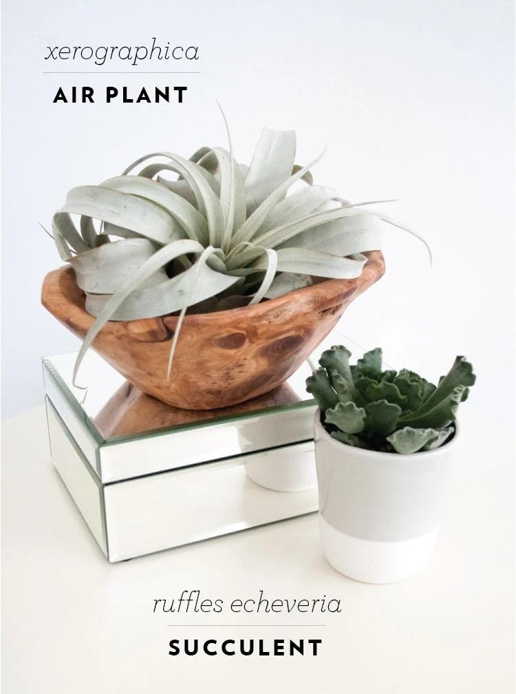 rft_plant6