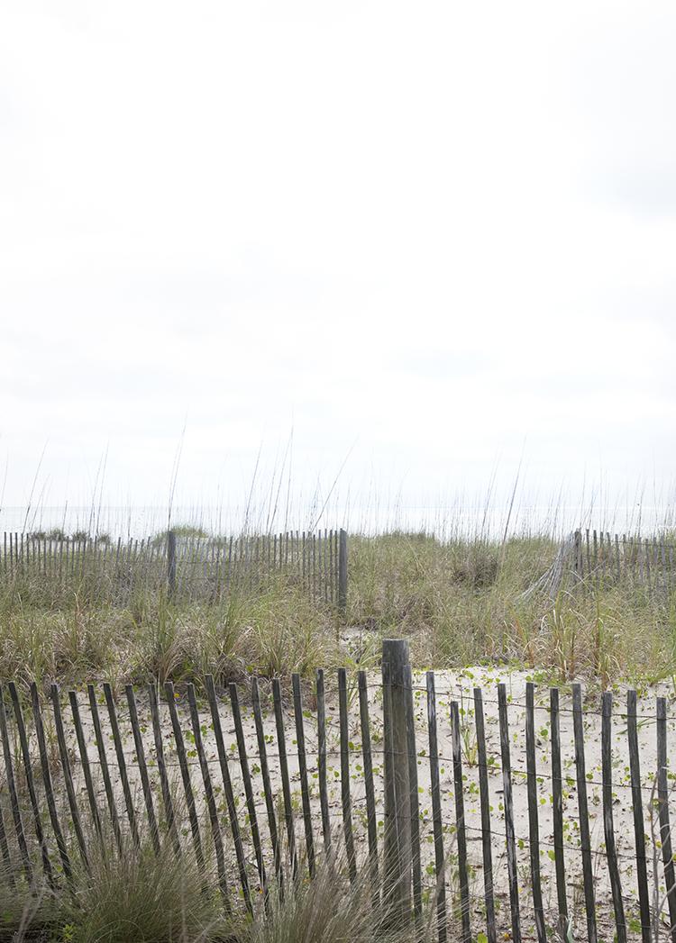 Carolina Beach Dunes