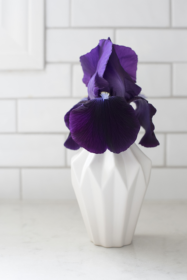 Simple Bud Vase with an Iris