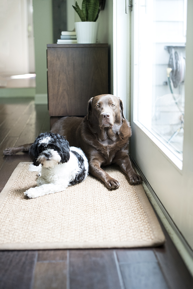 jute-rug-and-cute-dogs