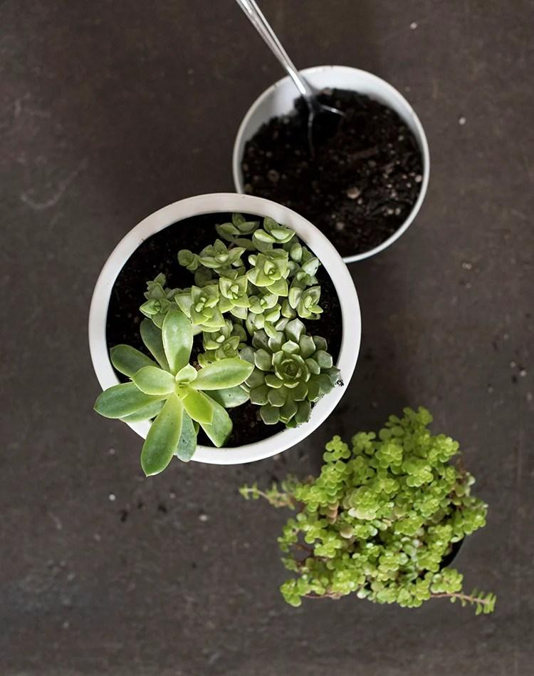 planter-diy