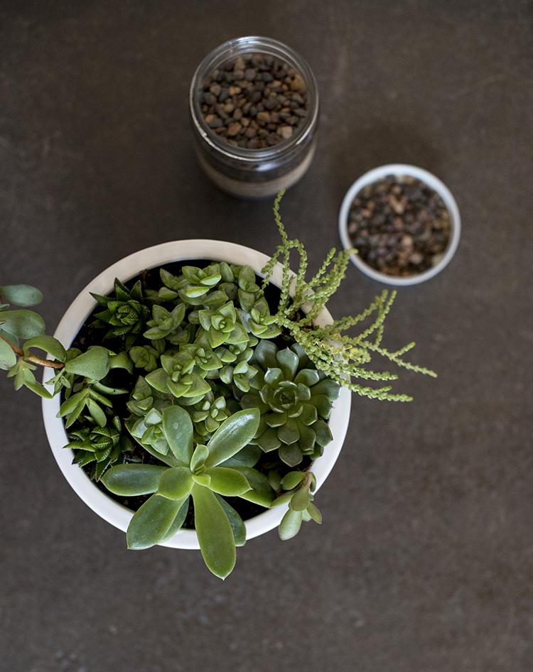 succulent-planter-detailed-diy