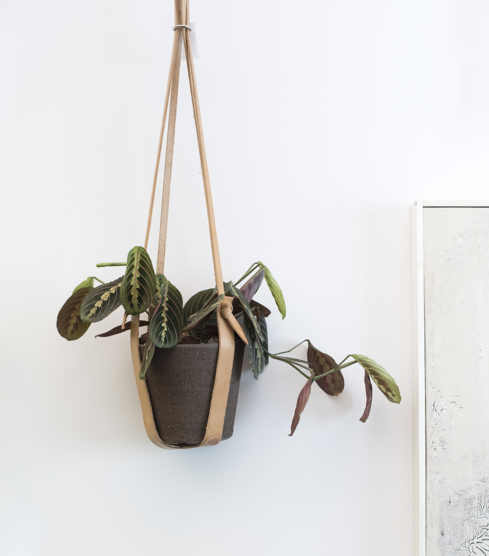 The Best Live Plants on Etsy