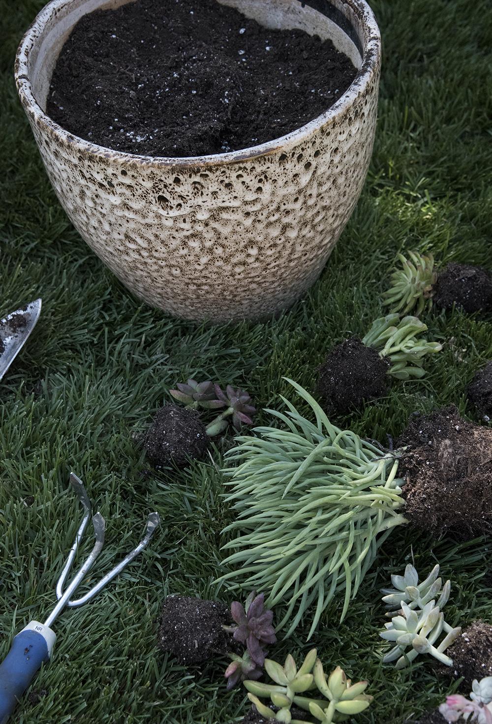 Outdoor Succulent Planter DIY - roomfortuesday.com