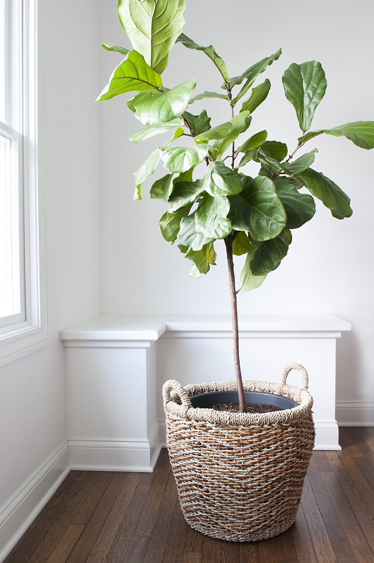 Amazon Finds : Faux Plants, Greenery, & Botanicals - roomfortuesday.com