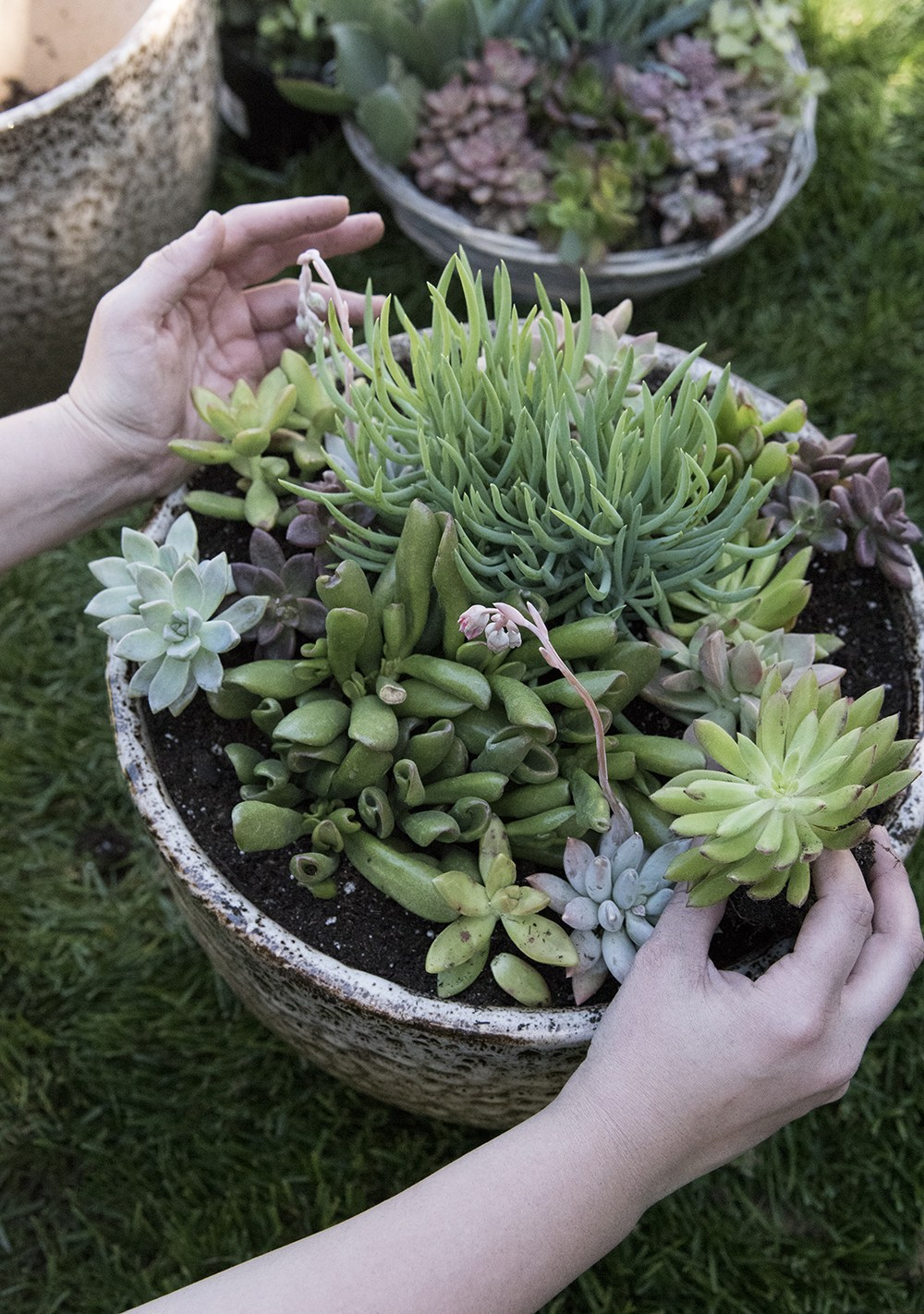 10 Posts for Those Who Love Plants & Gardening - roomfortuesday.com