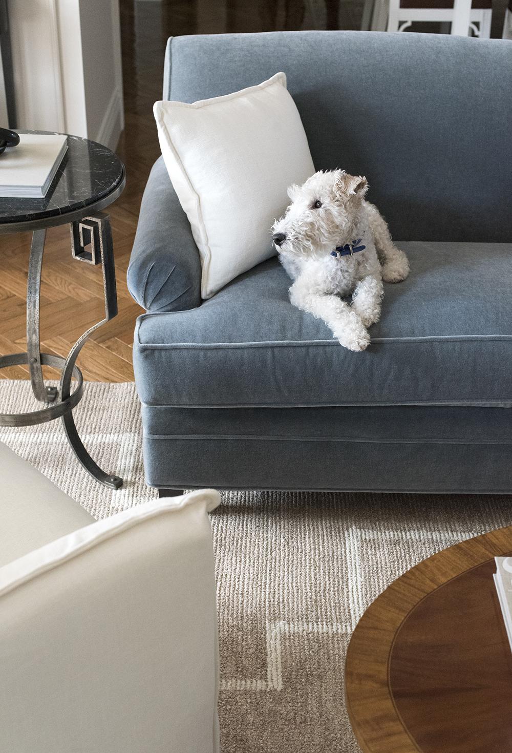 Kauči za obitelj i kućne ljubimce - roomfortuesday.com