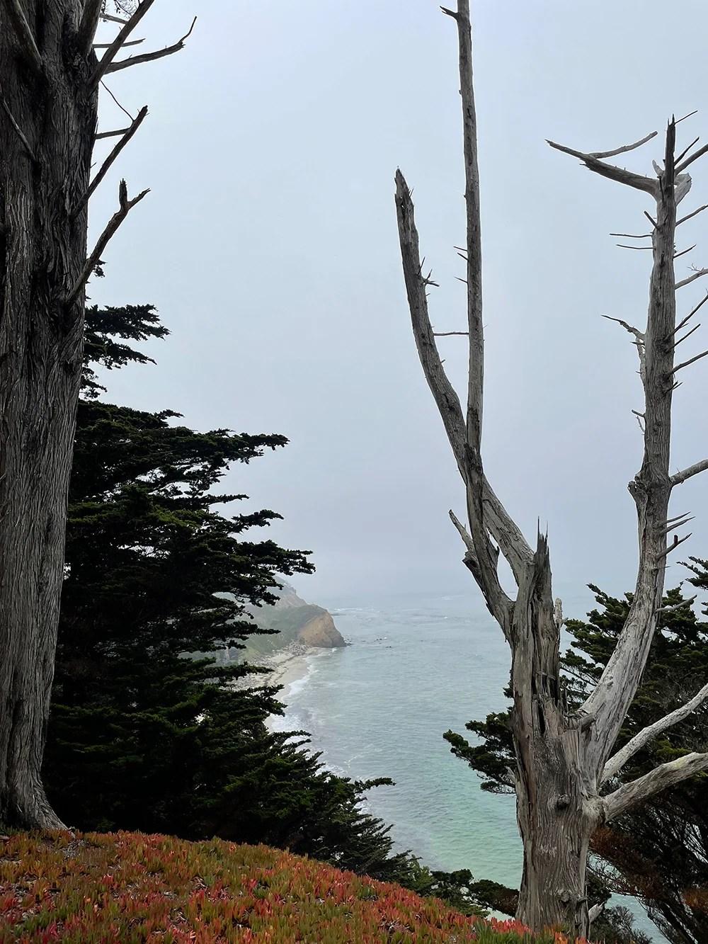 Seal Cove Inn At Moss Beach - roomfortuesday.com