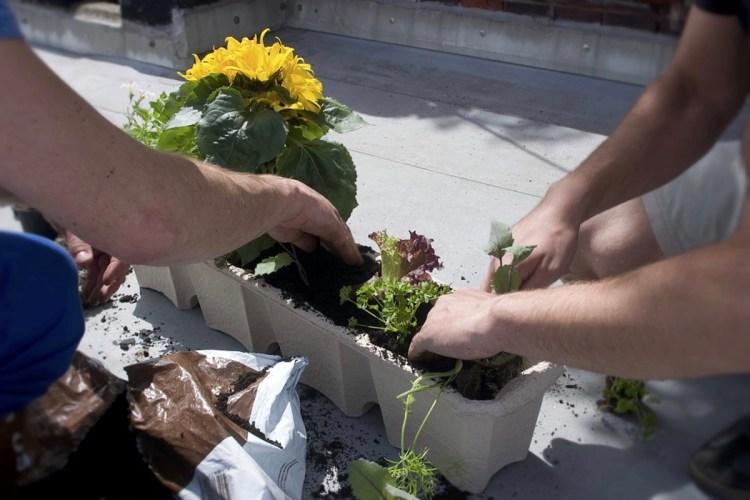 plant box balcony