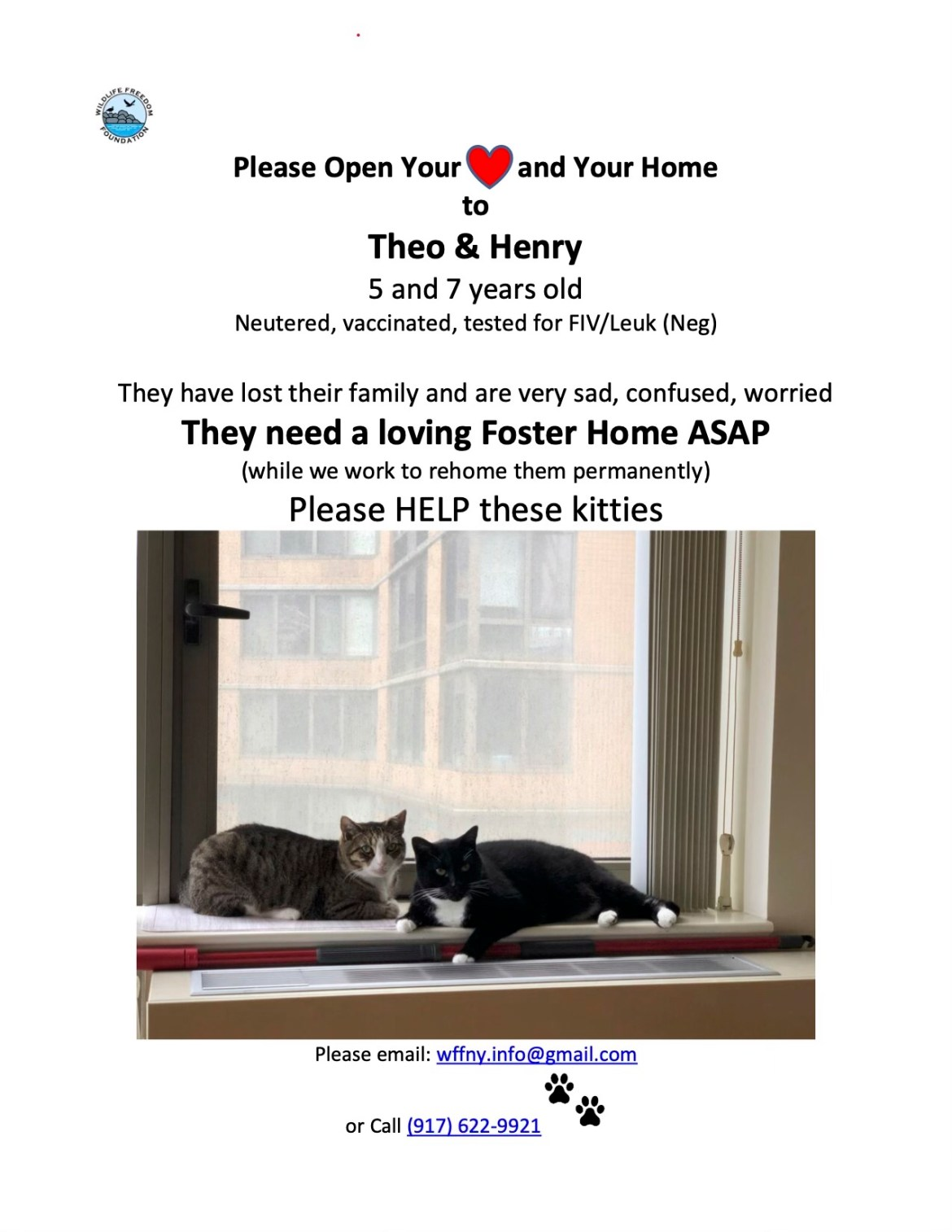 Roosevelt Island Cat Lovers: Theo and Henry Lost Their Home. Can you help?