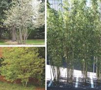 Meltwater drift materials - trees shrubs