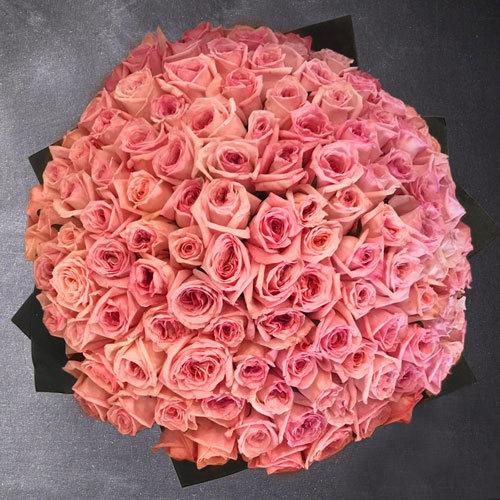100 roosat roosi