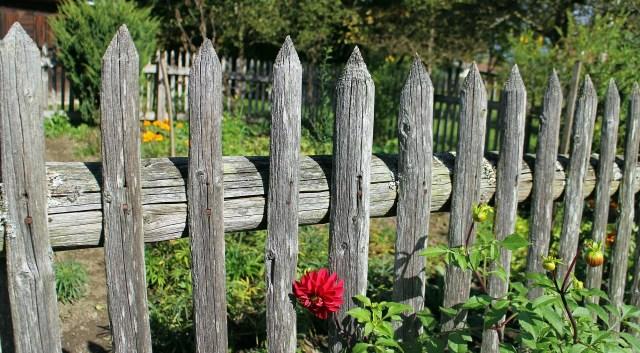 Garden fence roostervilleUSA.com