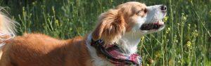 San Gabriel Valley dog trainer