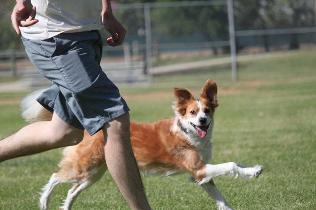San Gabriel Valley professional dog trainer