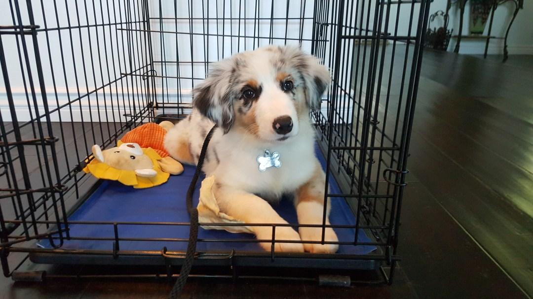 San Gabriel Valley Puppy Training