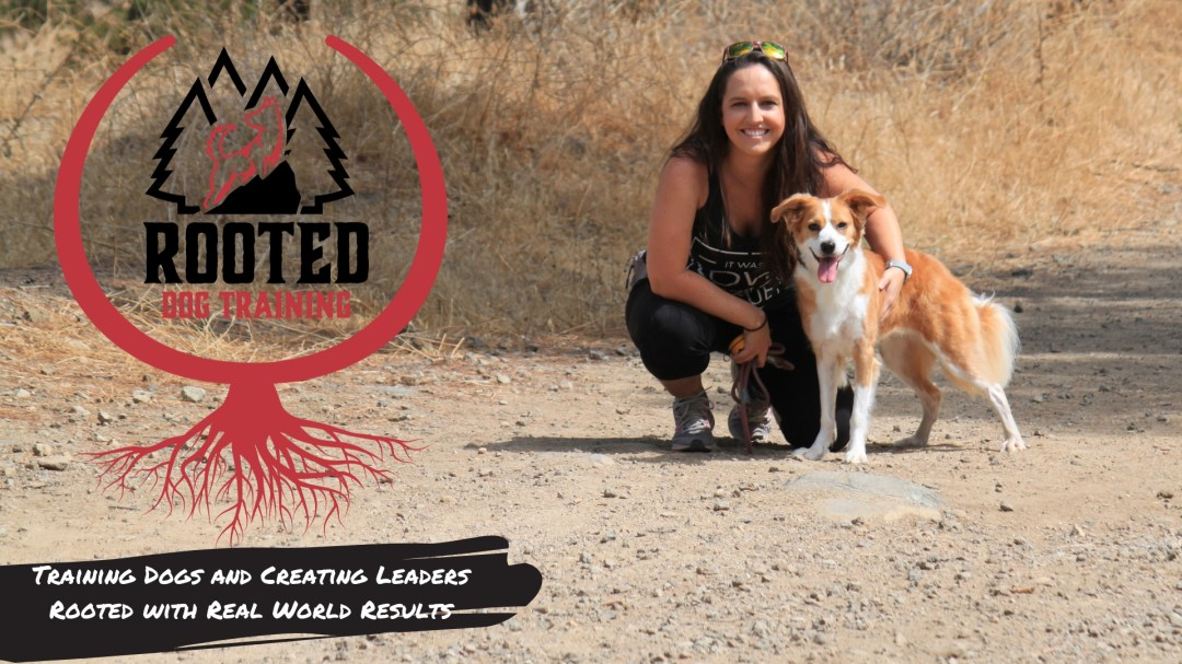 Ontario Dog Obedience Training That Gets Real Results