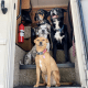 The Dogs of Root Level Tech