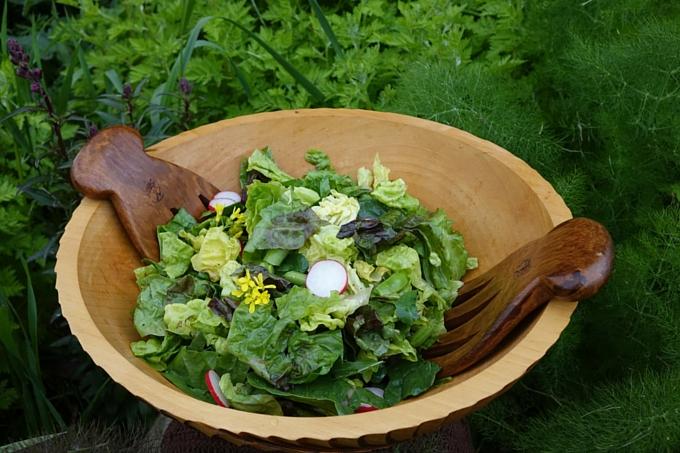 School garden spring harvest salad