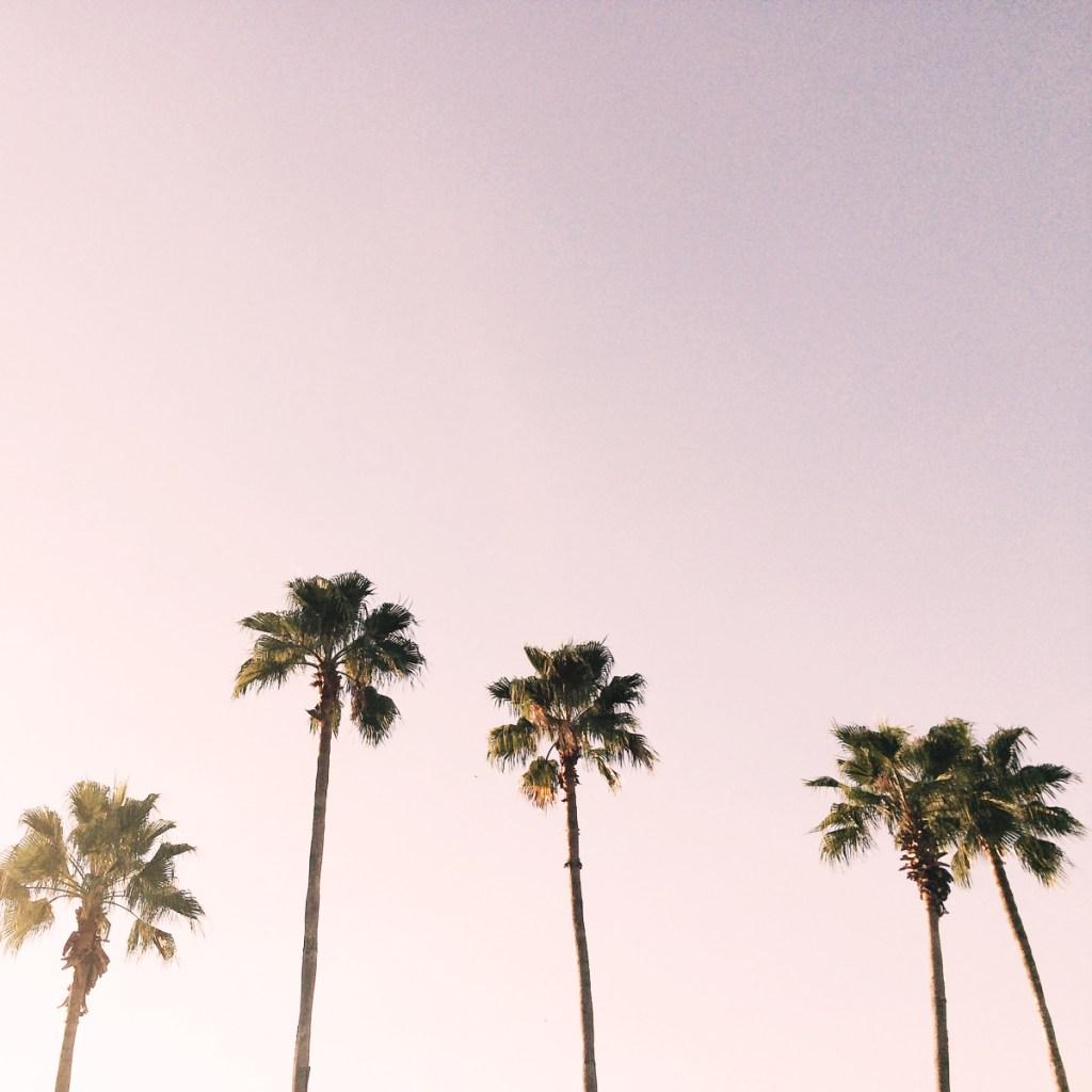 summer sky with palm trees summer bucket list