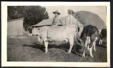 Stan Hutchings riding the cow