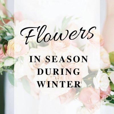 Flowers in Season During Winter