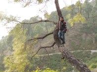 Raj chilling on a tree.